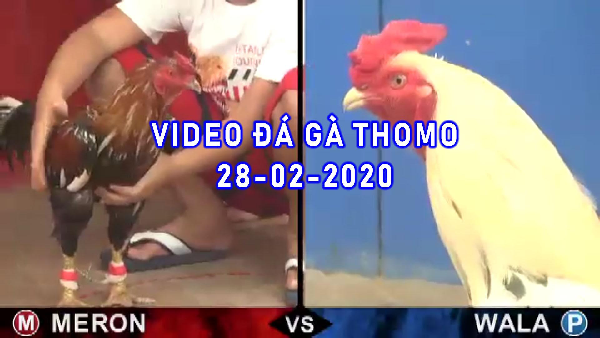 Đá gà cựa sắt thomo campuchia 28-2-2020