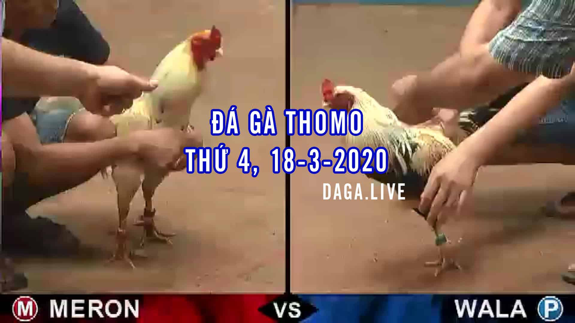 Đá gà thomo thứ 4 ngày 18 tháng 3 năm 2020 - DAGA.LIVE
