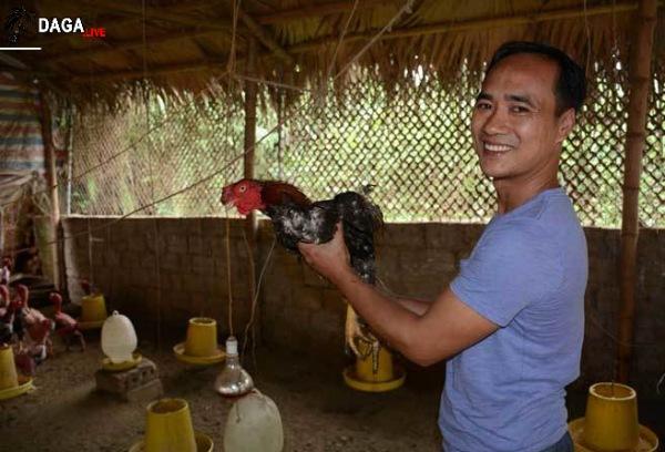 Từ một giám đốc trở thành người nuôi gà