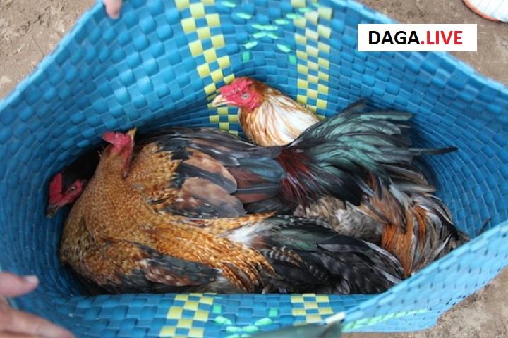 Tang vật được công an thu giữ về hành vi đá gà trái phép