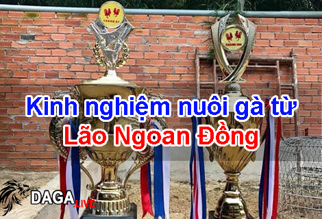 Kinh nghiệm nuôi gà từ Lão Ngoan Đồng