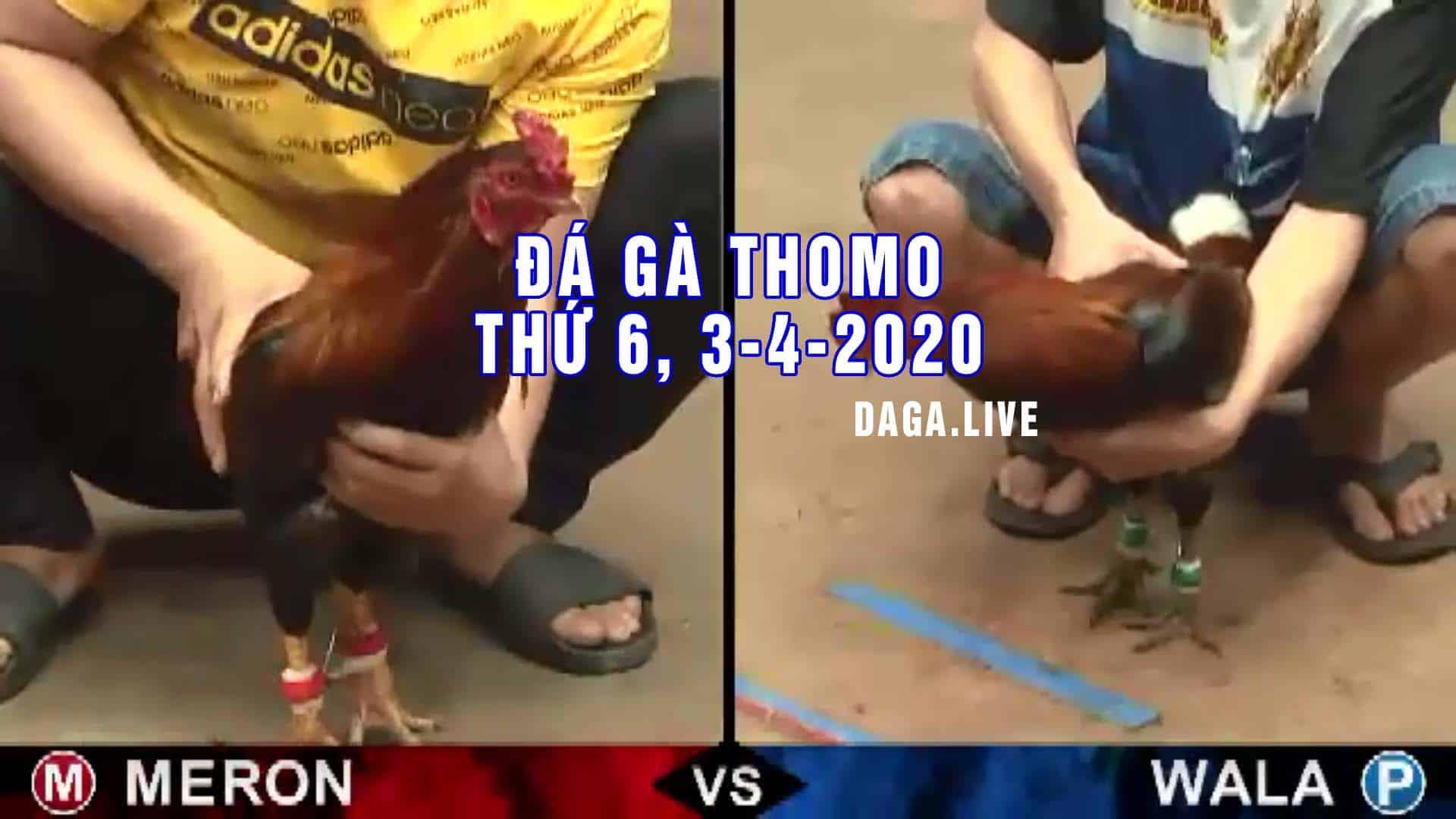 DAGA.LIVE - Đá gà thomo, đá gà campuchia, đá gà cựa sắt, đá gà trực tiếp thomo hôm nay thứ 6 ngày 3-4-2020