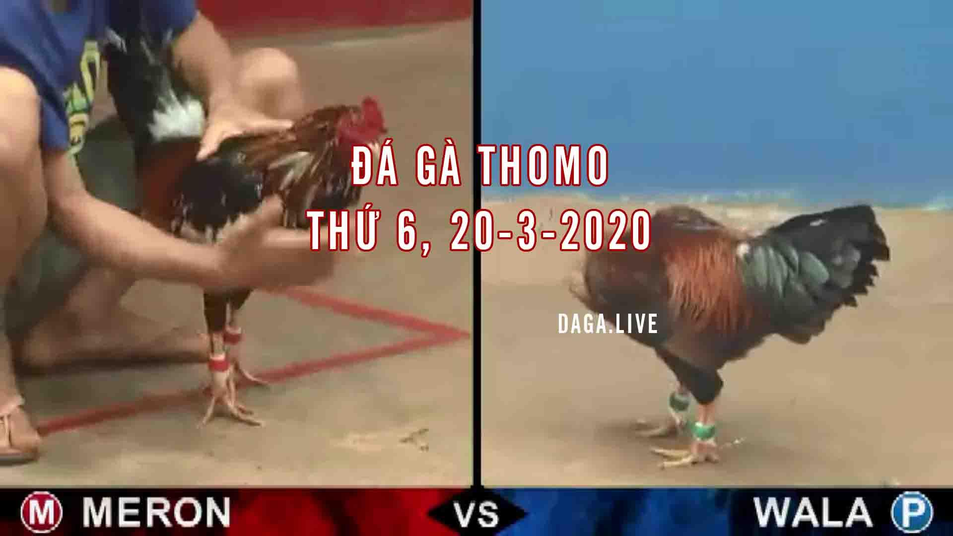 DAGA.LIVE - Đá gà thomo, đá gà campuchia, đá gà trực tiếp, đá gà cựa sắt thứ 6 ngày 20-3-2020