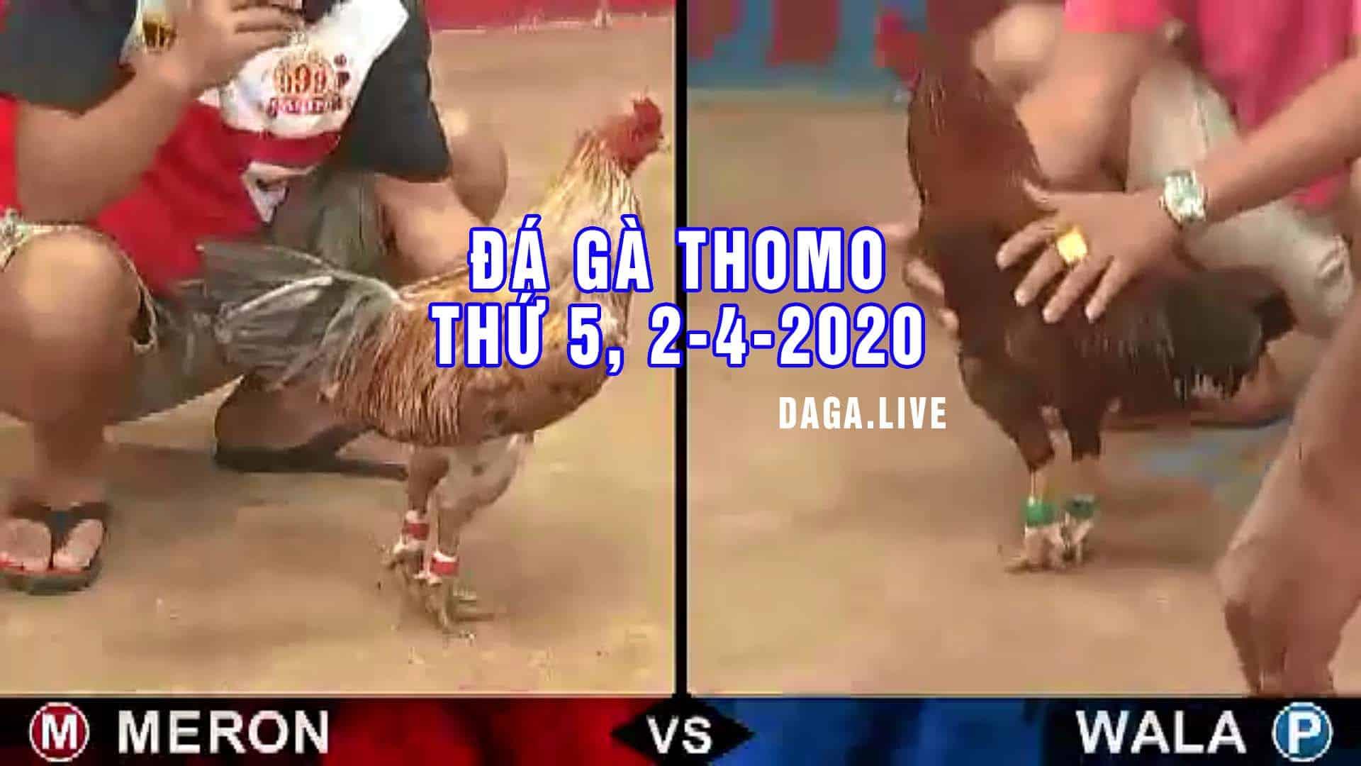 DAGA.LIVE - Đá gà thomo hôm nay, đá gà cựa sắt, đá gà campuchia, đá gà trực tiếp thứ 5 ngày 2-4-2020