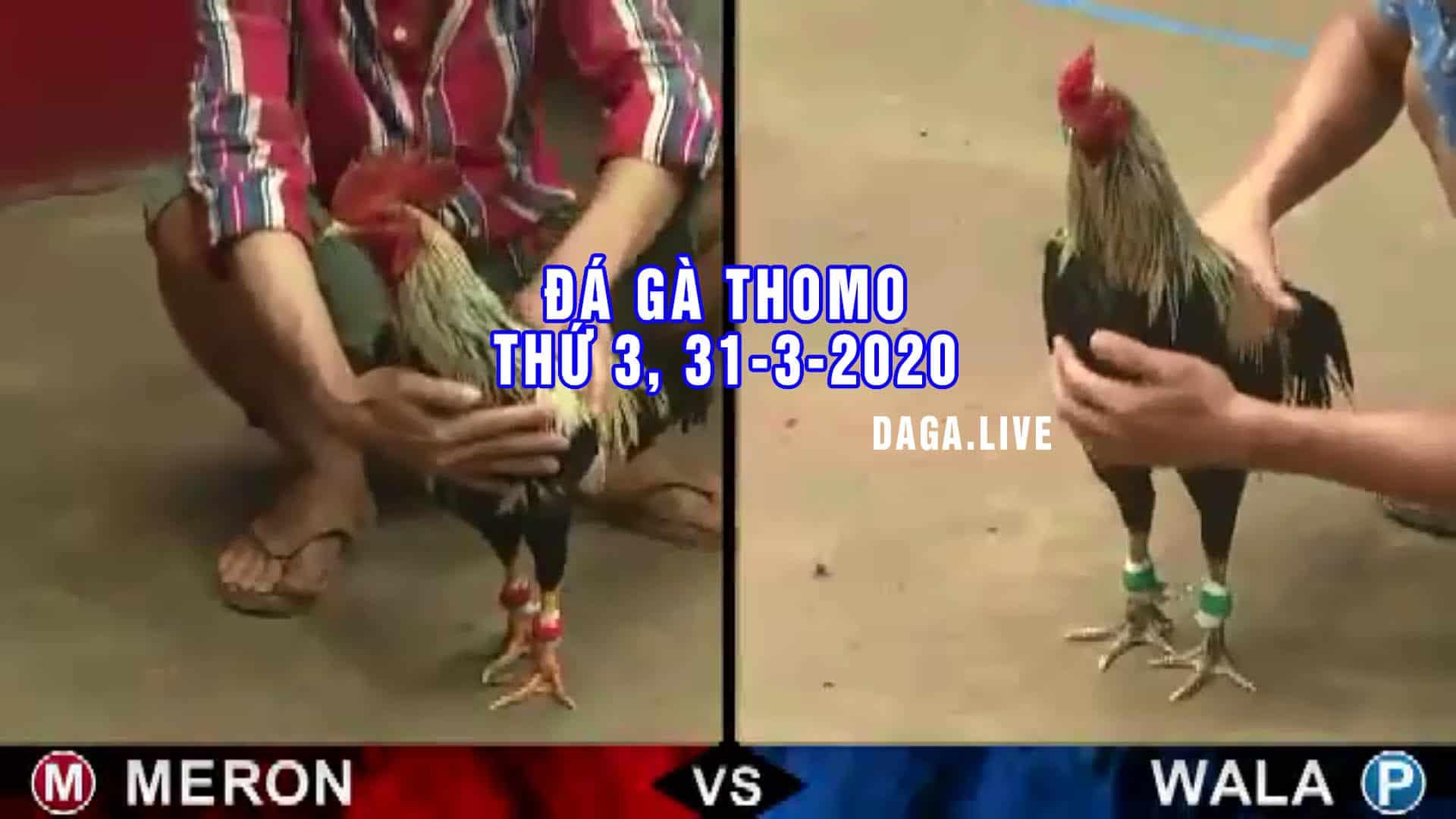 DAGA.LIVE - Đá gà thomo hôm nay, đá gà campuchia, đá gà cựa sắt, đá gà trực tiếp thứ 3 ngày 31-3-2020