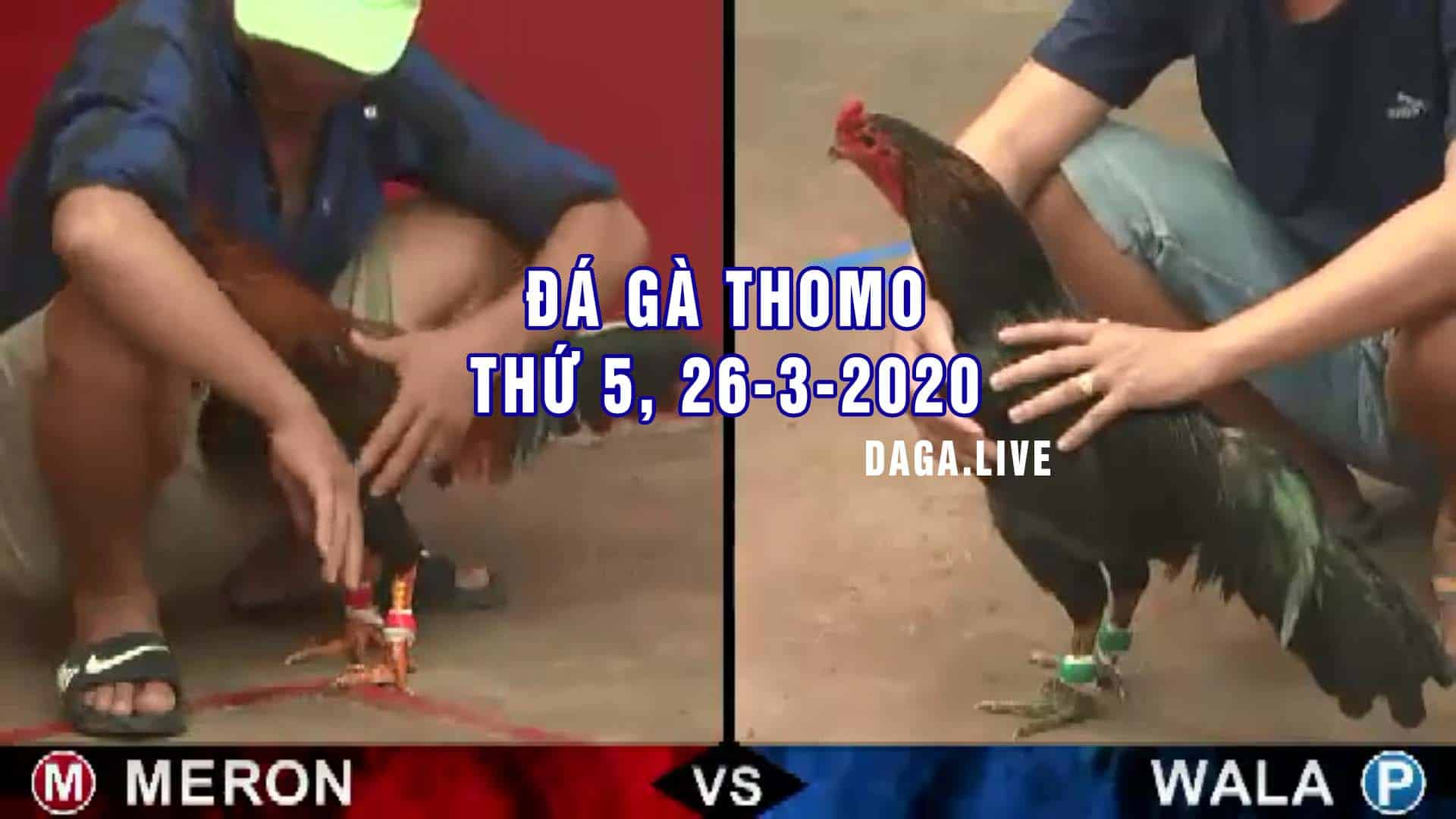DAGA.LIVE - Đá gà thomo hôm nay, đá gà campuchia, đá gà cựa sắt, đá gà trực tiếp thứ 5 ngày 26-3-2020
