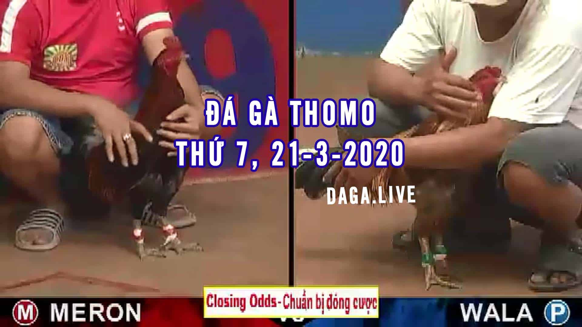 DAGA.LIVE - Đá gà thomo hôm nay, đá gà campuchia, đá gà cựa sắt, đá gà trực tiếp thứ 7 ngày 21-3-2020