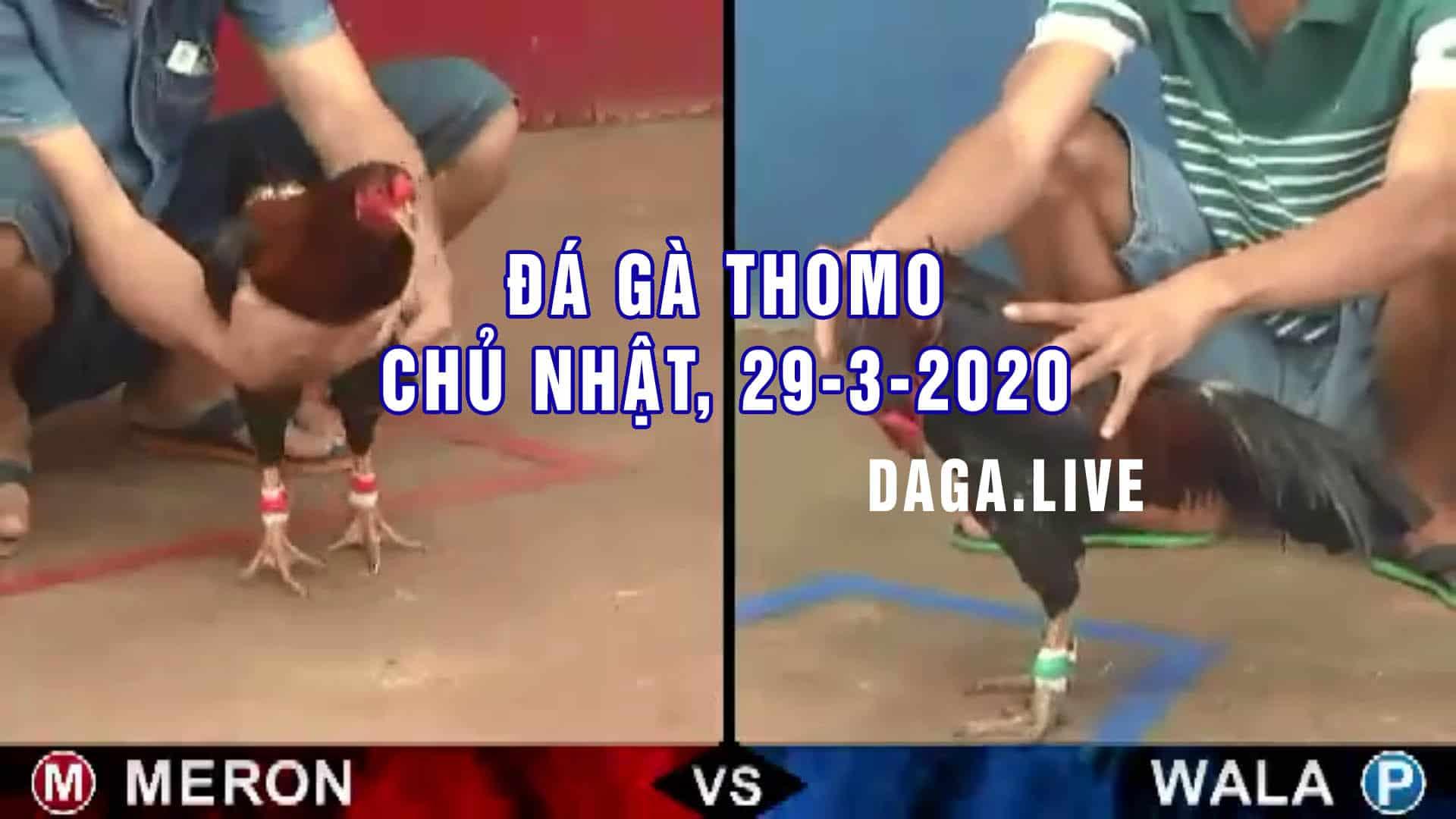 DAGA.LIVE- Đá gà thomo hôm nay, đá gà campuchia, đá gà trực tiếp, đá gà cựa sắt CHỦ NHẬT ngày 29-3-2020