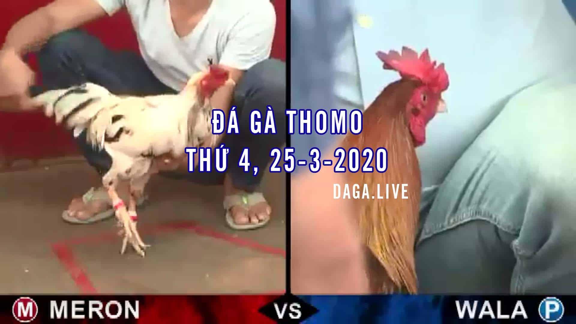 DAGA.LIVE - Đá gà thomo hôm nay, đá gà campuchia, đá gà trực tiếp, đá gà cựa sắt thứ 4 ngày 25-3-2020