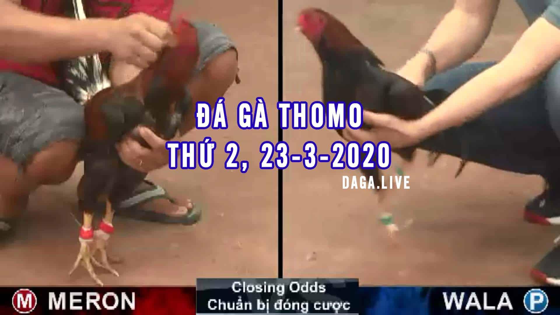 DAGA.LIVE - Đá gà thomo hôm nay, đá gà trực tiếp, đá gà cựa sắt, đá gà campuchia thứ 2 ngày 23-3-2020