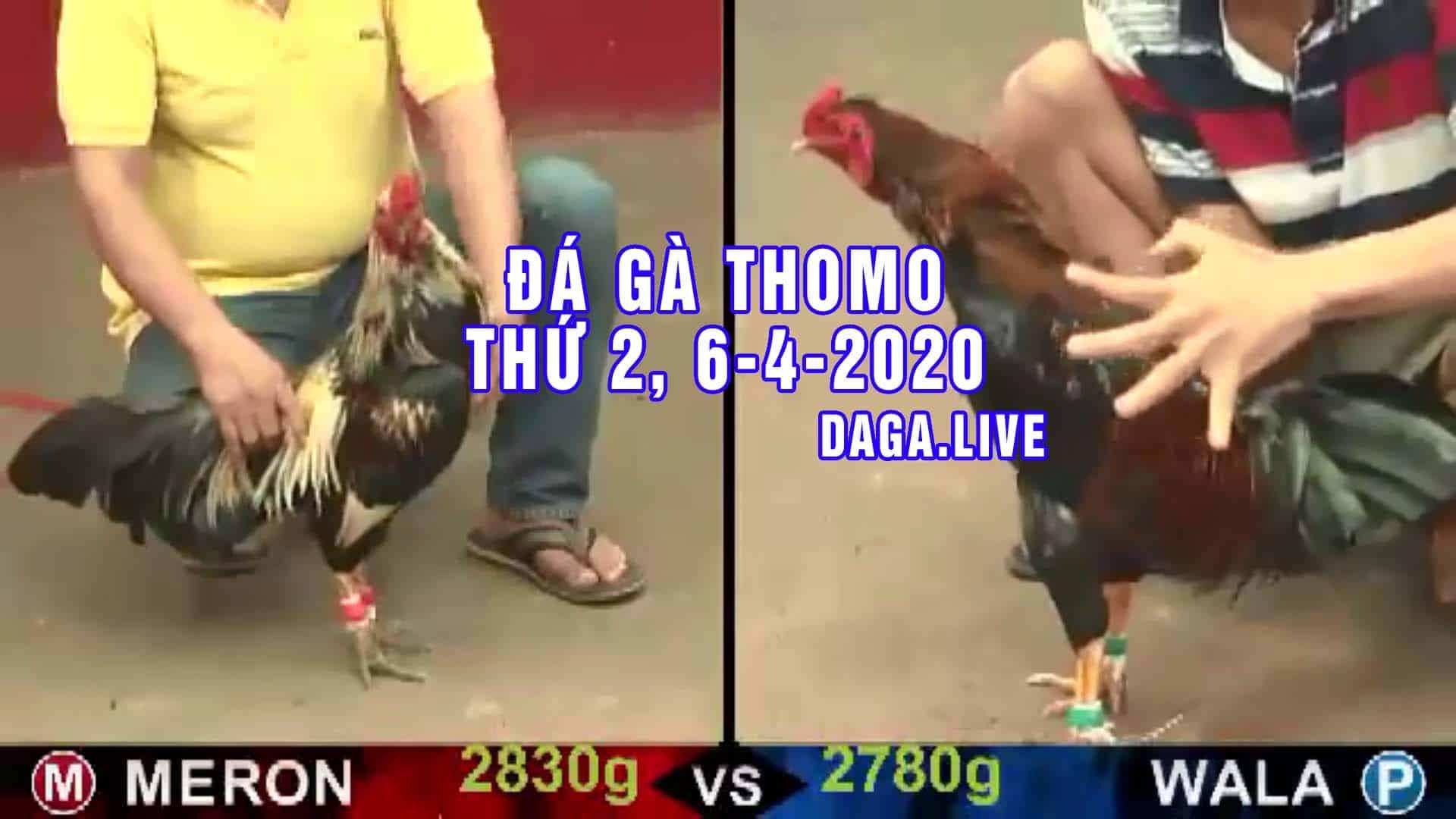 DAGA.LIVE - Đá gà thomo hôm nay, đá gà trực tiếp, đá gà campuchia, đá gà cựa sắt thứ 2 ngày 6-4-2020