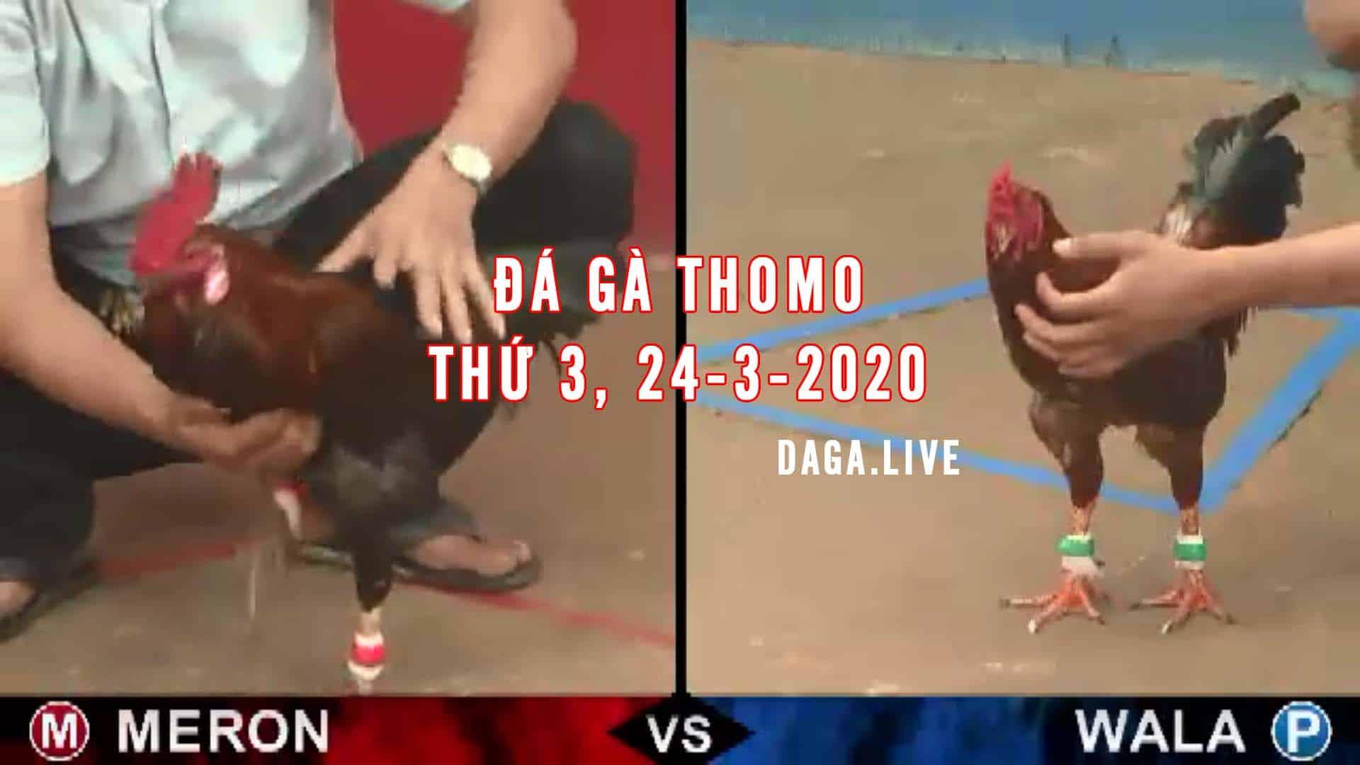 DAGA.LIVE - Đá gà thomo hôm nay, đá gà trực tiếp, đá gà campuchia, đá gà cựa sắt thứ 3 ngày 24-3-2020