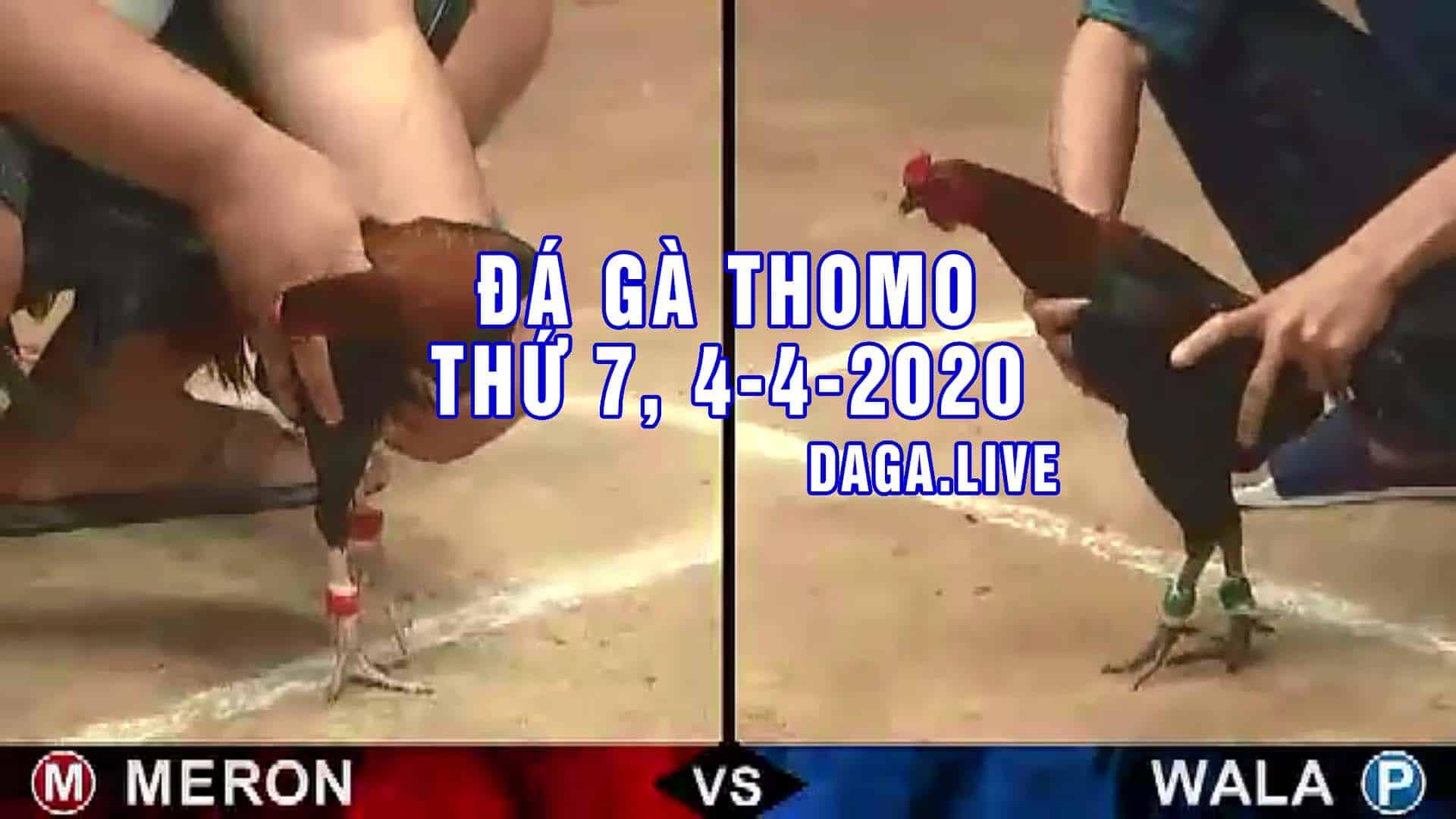 DAGA.LIVE - Đá gà thomo hôm nay, đá gà trực tiếp, đá gà campuchia, đá gà cựa sắt thứ 7 ngày 4-4-2020