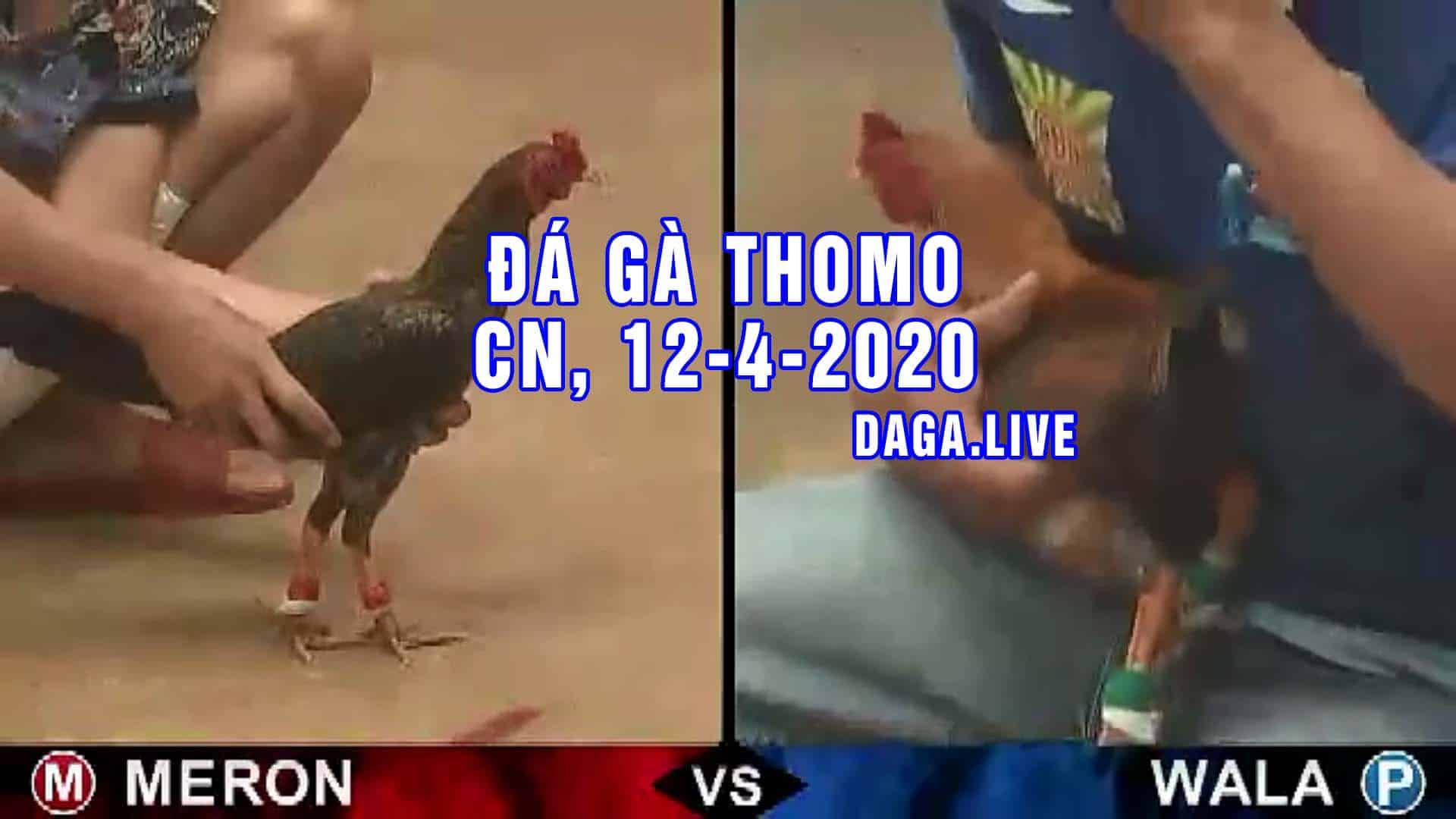 DAGA.LIVE - Đá gà trực tiếp thomo hôm nay, đá gà thomo, đá gà campuchia CHỦ NHẬT NGÀY 12-4-2020