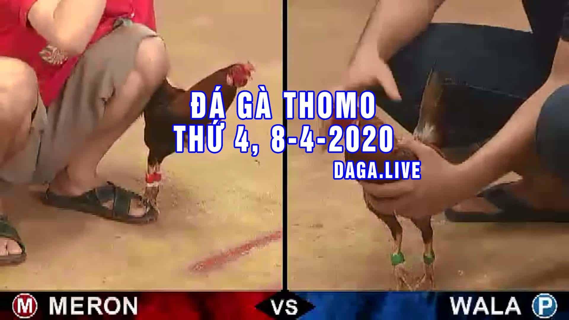 DAGA.LIVE - Đá gà trực tiếp thomo hôm nay, đá gà thomo, đá gà campuchia thứ 4 ngày 8-4-2020