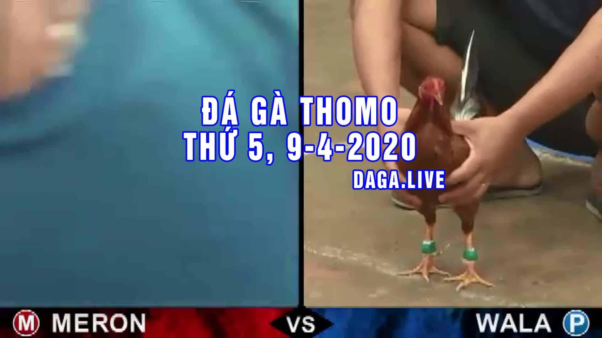 DAGA.LIVE - Đá gà trực tiếp thomo hôm nay, đá gà thomo, đá gà campuchia thứ 5 ngày 9-4-2020