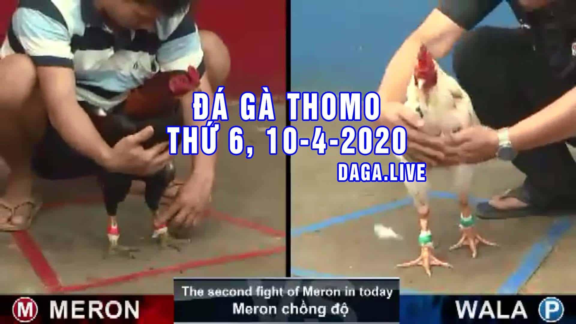 DAGA.LIVE - Đá gà trực tiếp thomo hôm nay, đá gà thomo, đá gà campuchia thứ 6 NGÀY 10-4-2020