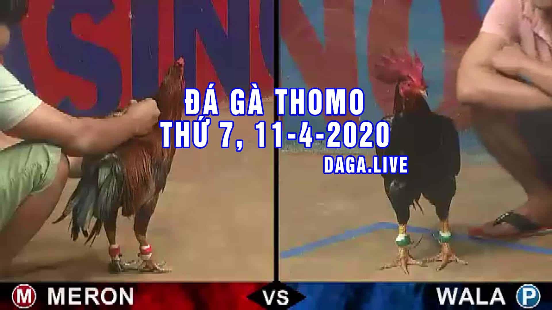 DAGA.LIVE - Đá gà trực tiếp thomo hôm nay, đá gà thomo, đá gà campuchia thứ 7 NGÀY 11-4-2020