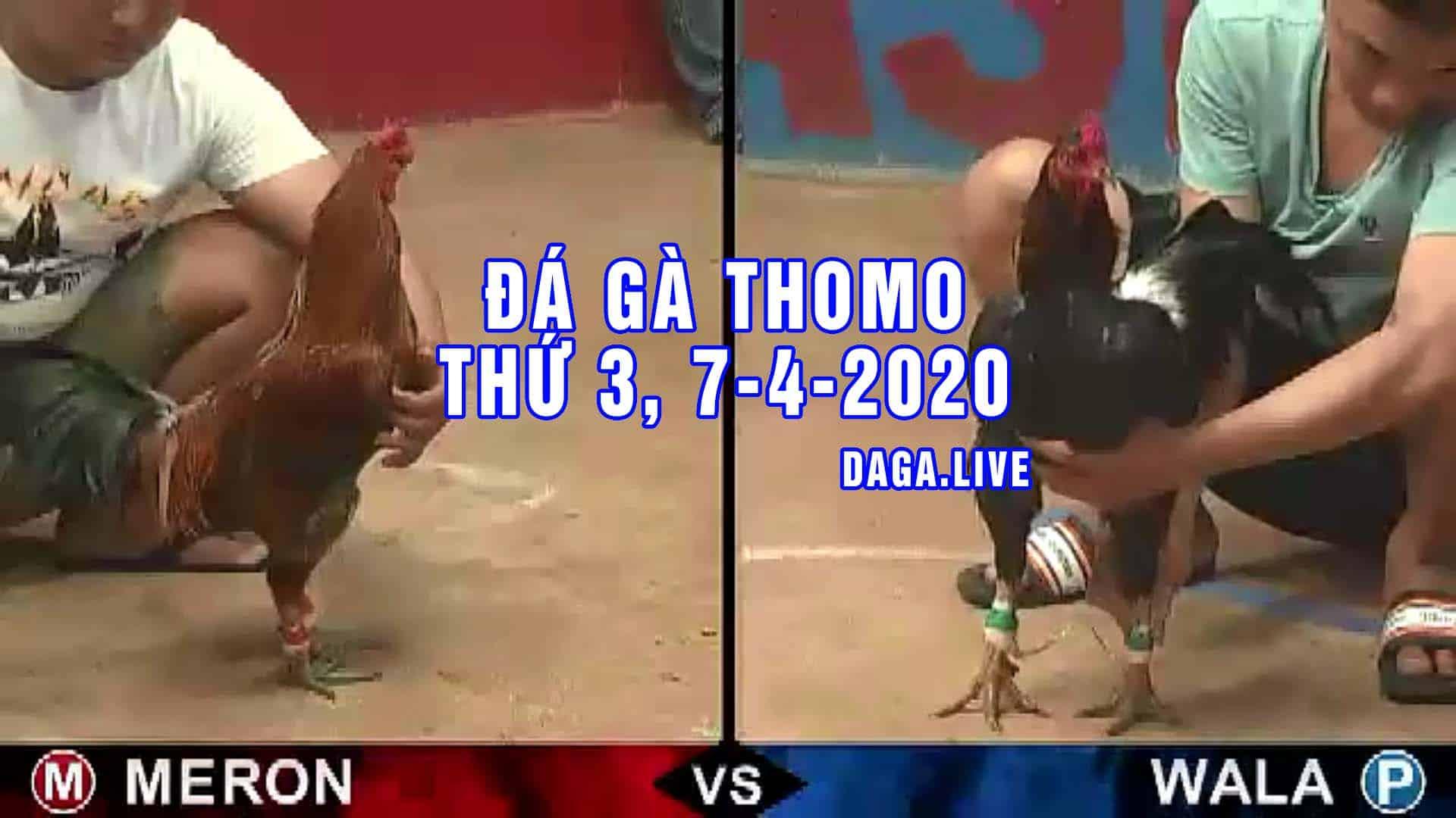 DAGA.LIVE - Đá gà trực tiếp thomo hôm nay, đá gà thomo, đá gà camuchia, đá gà cựa sắt thứ 3 ngày 7-4-2020