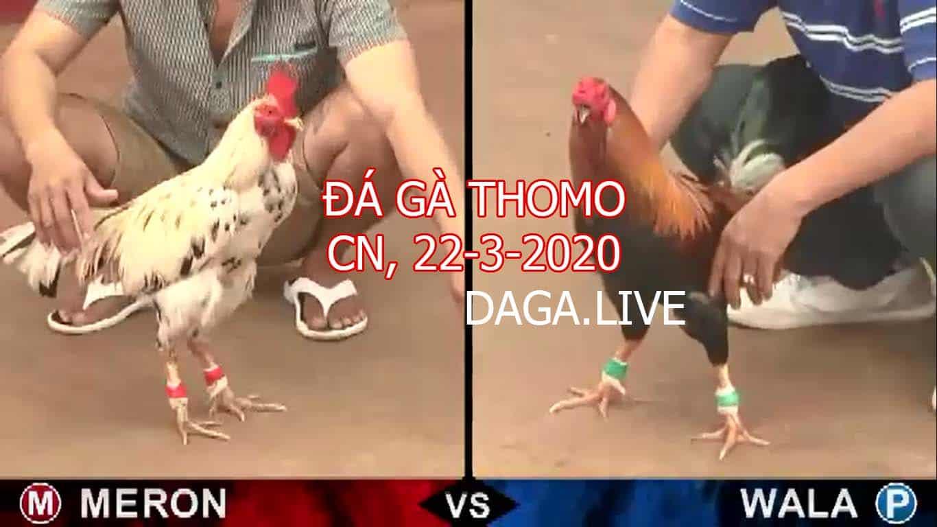 DAGA.LIVE - đá gà thomo hôm nay, đá gà cựa sắt, đá gà campuchia, đá gà trực tiếp chủ nhật ngày 22-3-2020