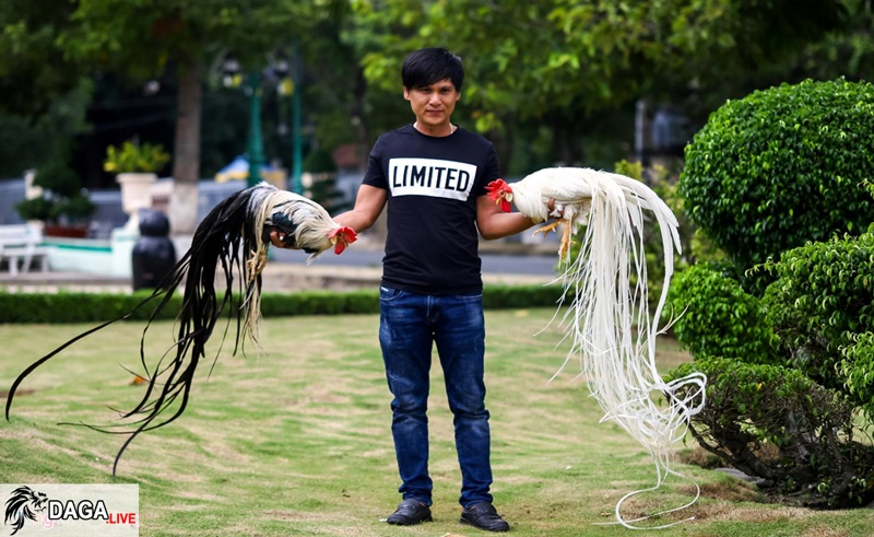 nuôi gà đuôi dài