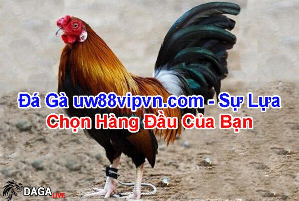 da-ga-uw88vipvn.com-su-lua-chon-hang-dau-cua-ban