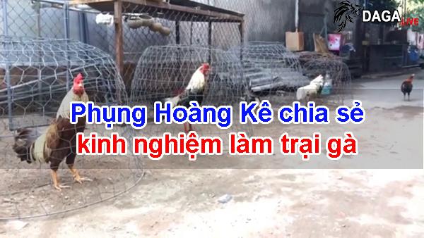 Phụng Hoàng Kê chia sẻ kinh nghiệm làm trại gà