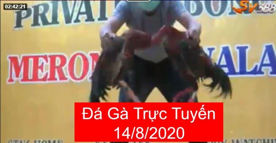 Đá Gà Trực Tuyến 14/8/2020 Cuộc Chiến Gay Cấn Không Thể Bỏ Qua
