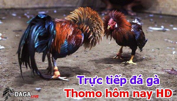 Trực tiếp đá gà Thomo hôm nay HD