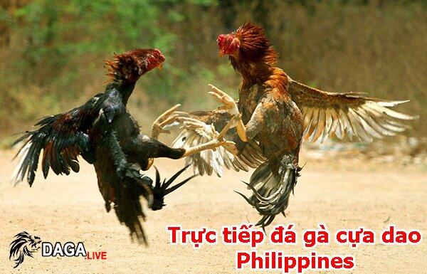 Trực tiếp đá gà cựa dao Philippines