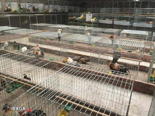 làm chuồng gà bằng lưới thép b40