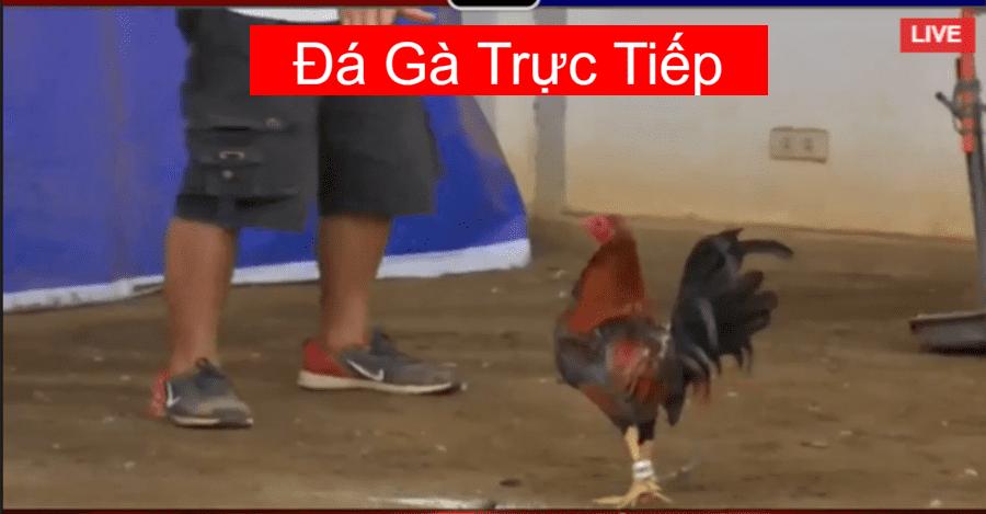 da-ga-truc-tiep-4-8-2020
