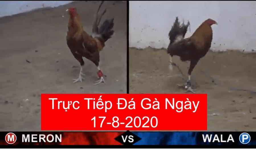 da-ga-truc-tiep-ngay-17-8-2020
