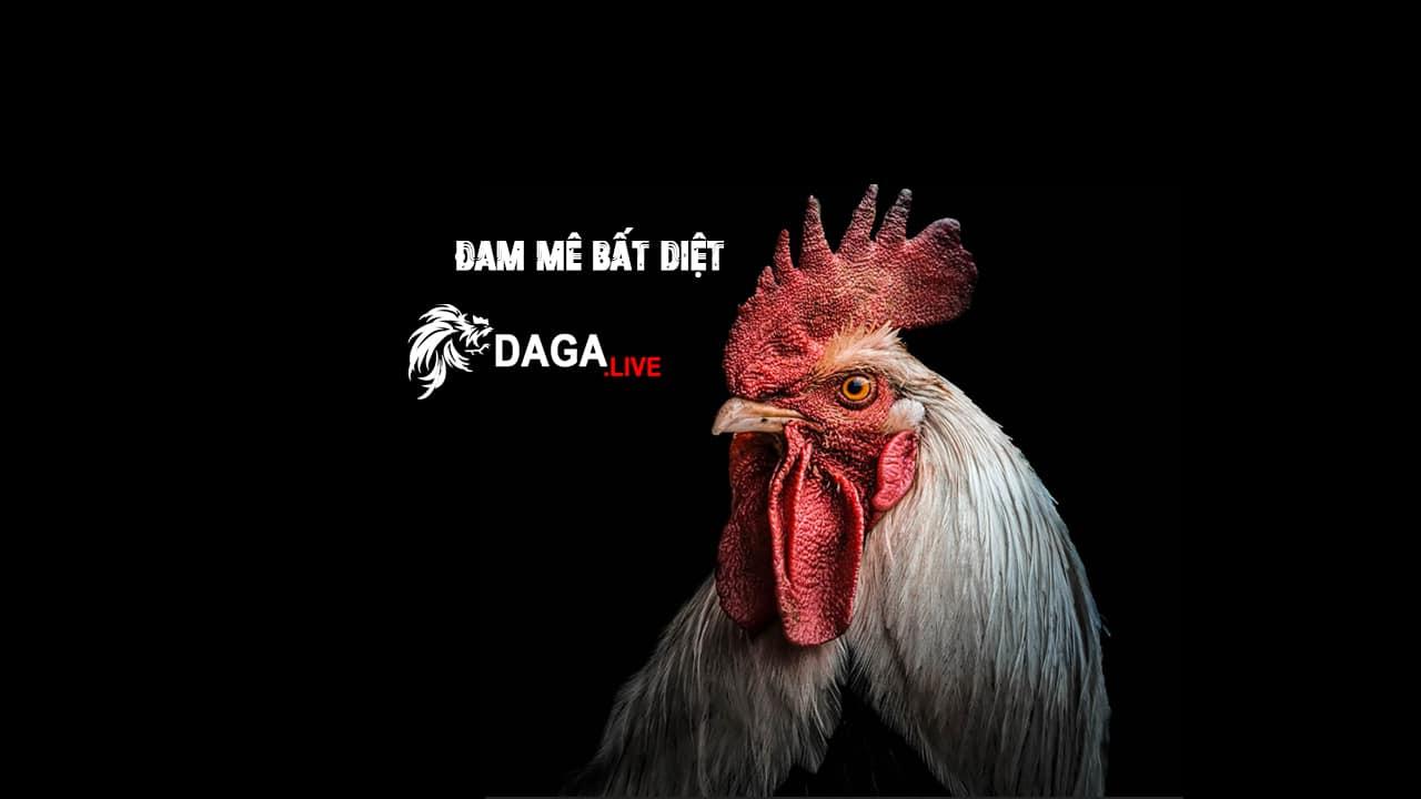 daga.live-banner