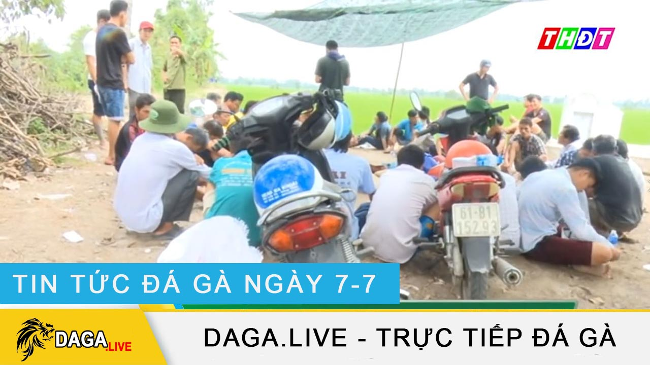 dagalive-tin-tuc-da-ga-7-7