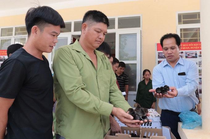 mô hình liên kết nuôi gà thả vườn tỉnh Tuyên Quang