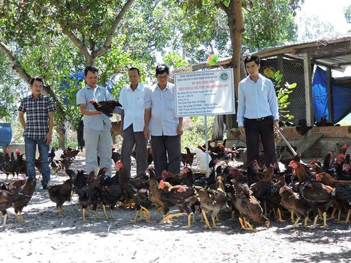 mô hình chăn nuôi gà bằng thảo dược ở bình định
