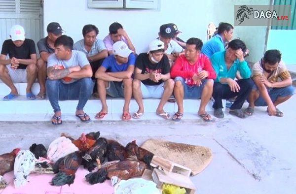 Triệt phá sới gà bắt giữ hơn 100 đối tượng tại An Giang