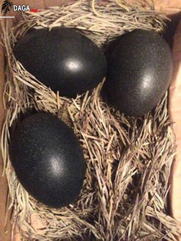 Hàm lượng dinh dưỡng và ý nghĩa mà gà đen mang lại